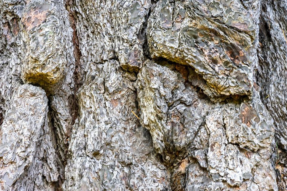 Wood, Texture, Rough, Tree, Antique, Log, Forest, Old