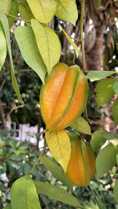 Carambola, Starfruit, Fruit, Tree, Leaf, Orange