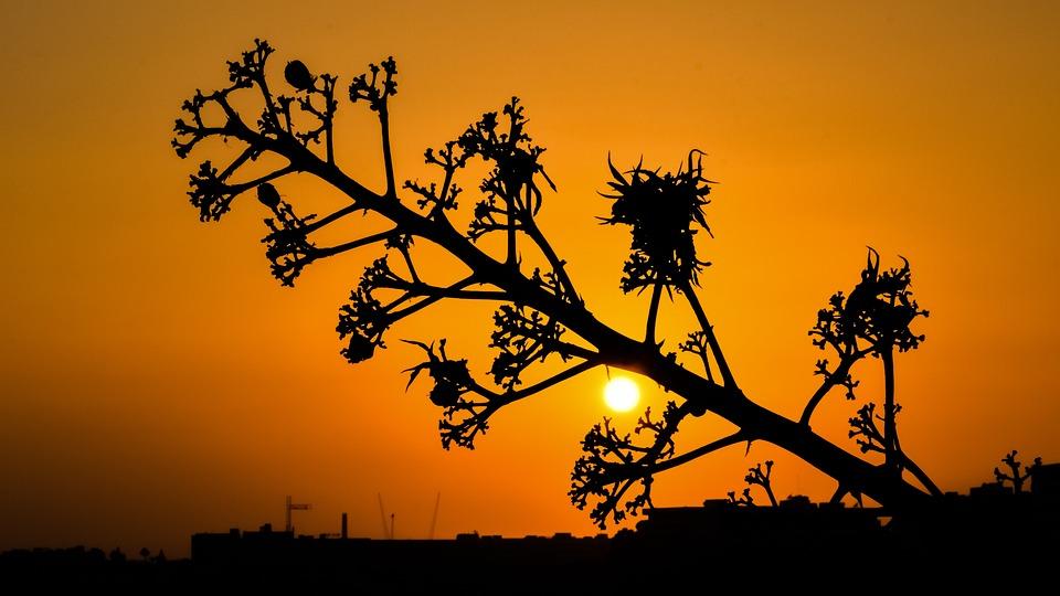 Tree, Sun, Sunset, Nature, Orange, Shadows, Evening