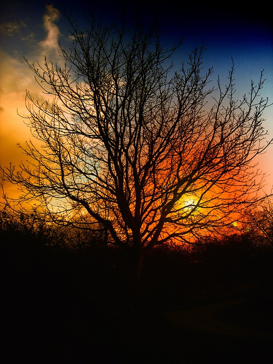 Tree, Sunset, Beautiful, Sky, Clouds, Orange, Red