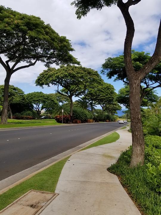 Tree, Road, Nature, Outdoors, Guidance, Sidewalk