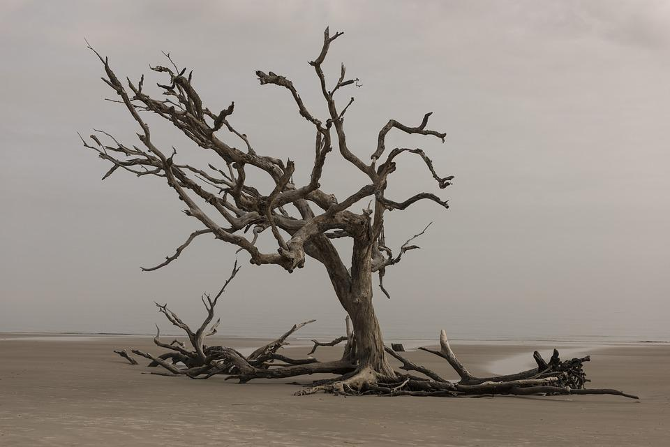 Tree, Nature, Landscape, Water, Outdoors, Dry, Sea