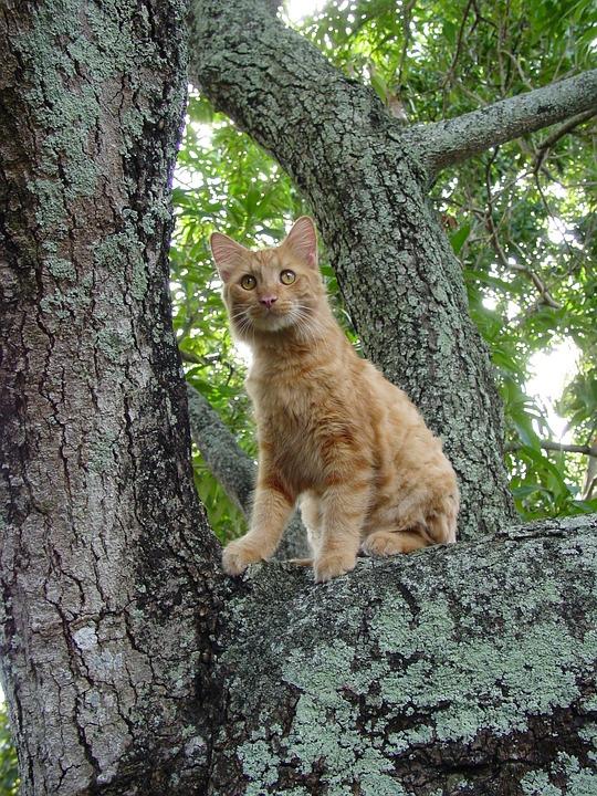 Nature, Tree, Wood, Mammal, Outdoors, Cat