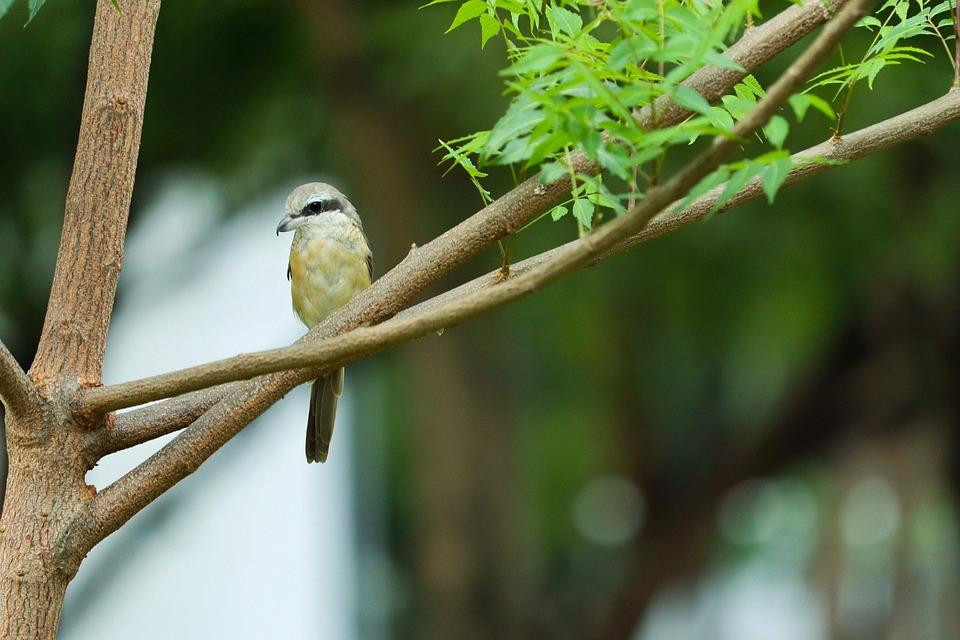 Nature, Outdoors, Tree, Wildlife, Bird