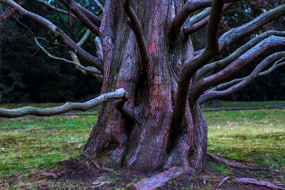 Tree, Aesthetic, Root, Overgrown, Make The Most Of