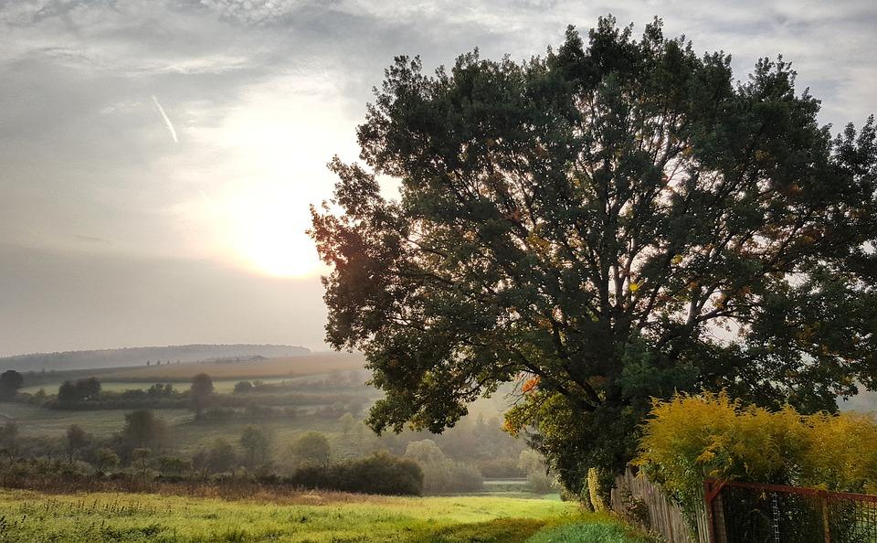 Tree, Landscape, Nature, Panorama, Grass, Sky, Wood