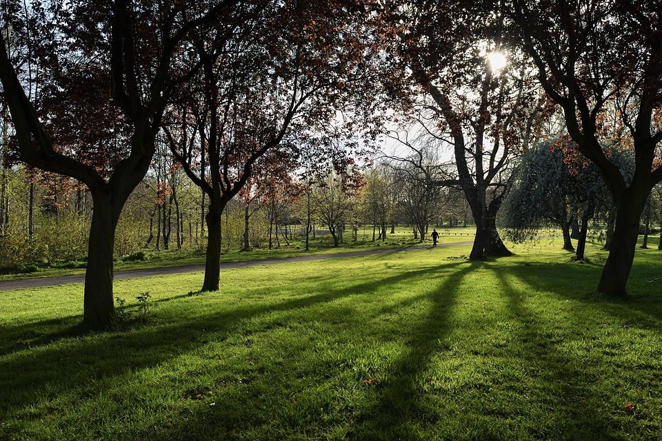 Lurgan-northern Ireland, Park, Tree, The Sun