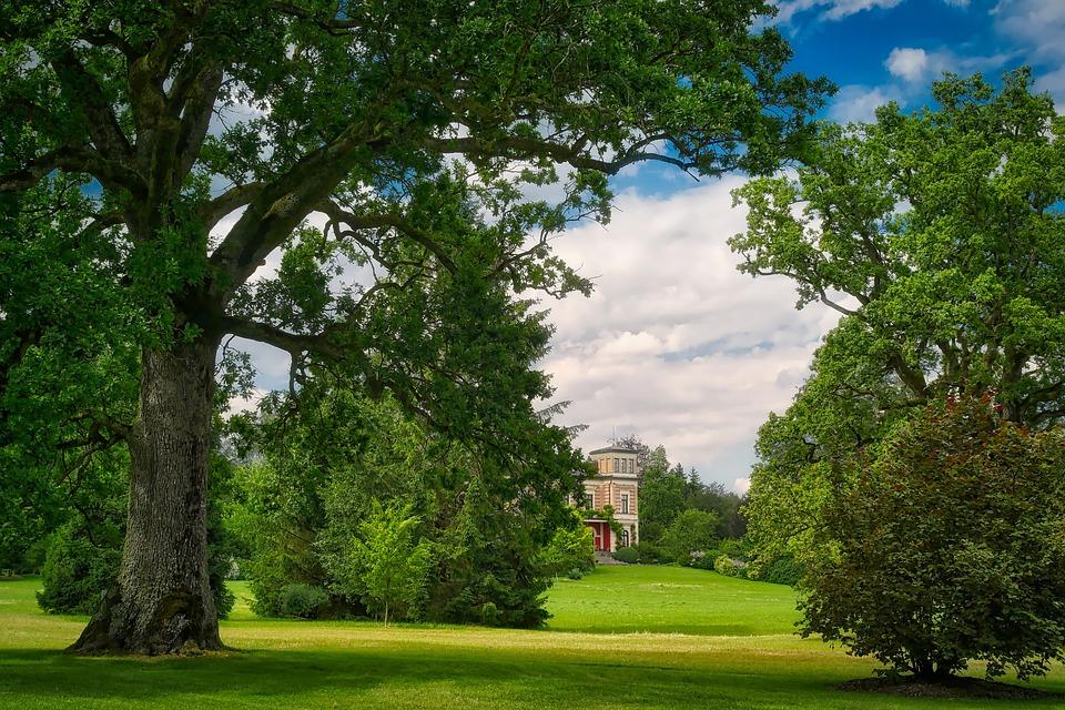 Tree, Landscape, Nature, Grass, Summer, Park