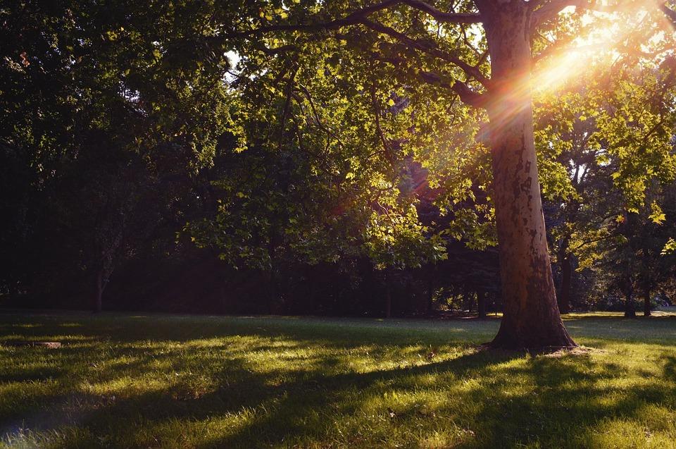 Park, Tree, Sun, Budapest