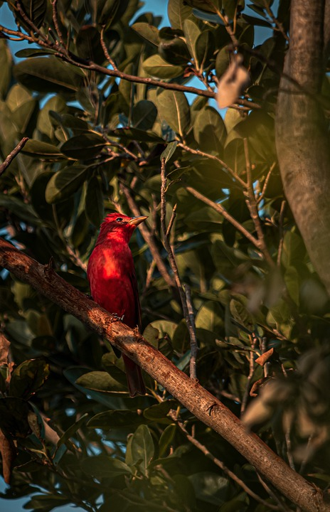 Bird, Tree, Perched, Leaves, Foliage, Perched Bird