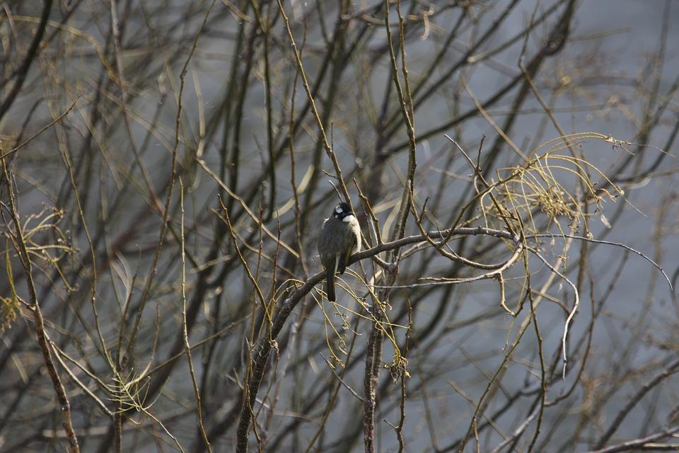 Starling, Bird, Branch, Tree, Avian, Perched, Winter