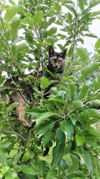 Cat, Climb, Tree, Nature, Pet