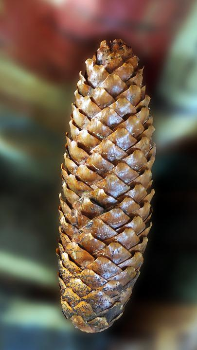 Pine Cones, Tree Fruit, Decoration, Forest, Tree, Grove