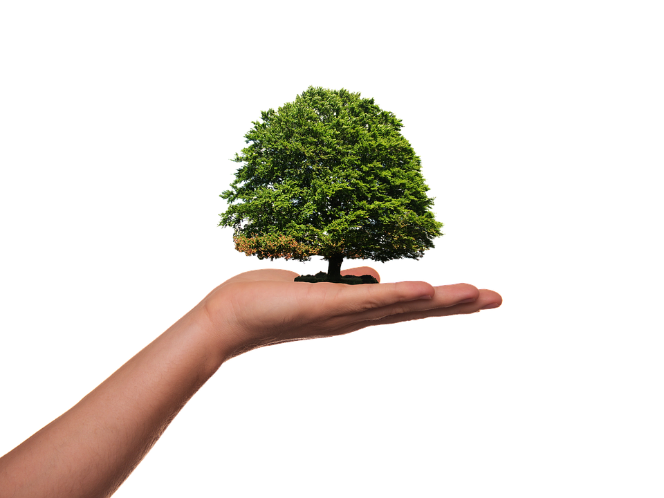 Plant, Tree, Green, Ecology, Environment, Protection