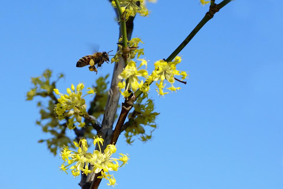 Nature, Flying Bee, Growth, Plant, Tree, Blossom