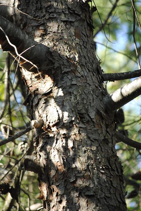 Tree, Bark, Nature, Wood, Outdoors, Leaf, Plant, Large
