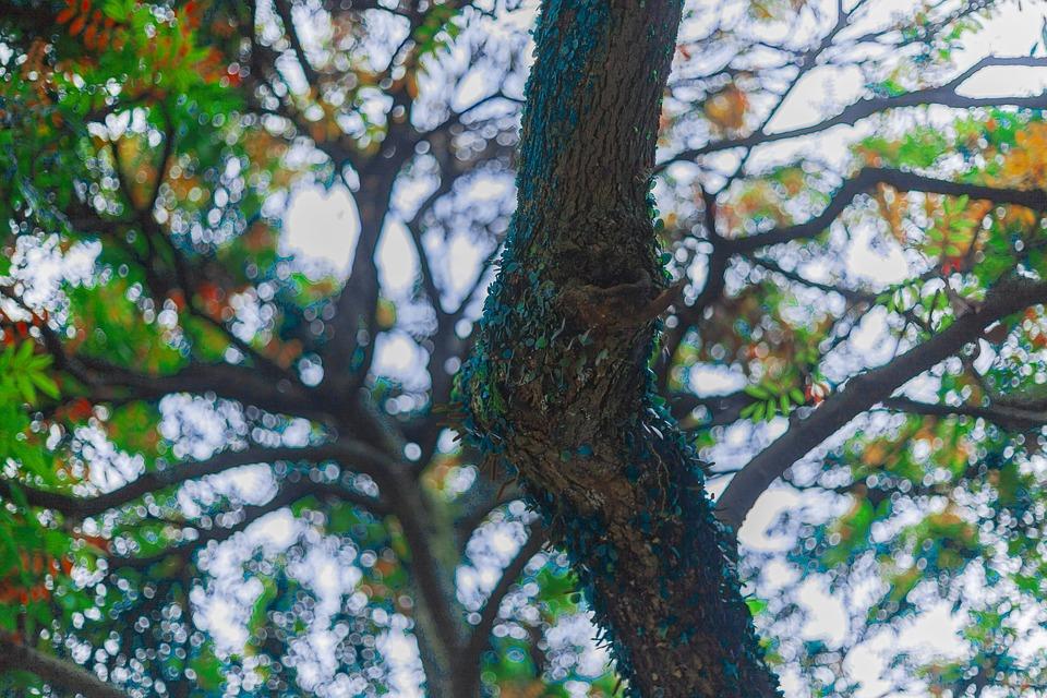 Tree Planting, Rain, Spring, Color