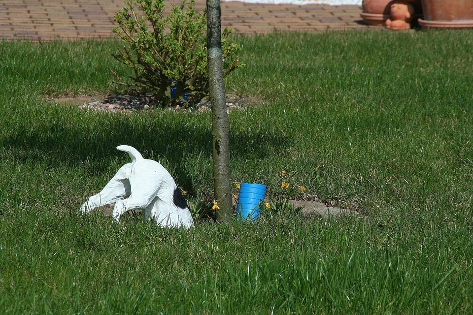 Dog, Tree, Plastic