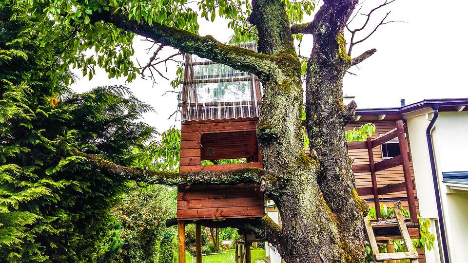 Tree, Treehouse, Nature, Tree Hut, Wood, Play, Retreat