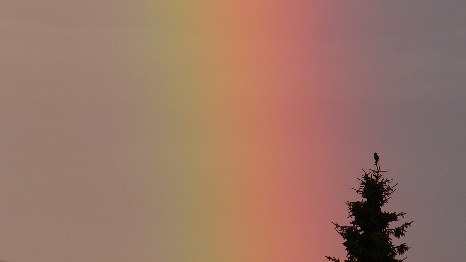 Rainbow, Spectrum, Tree, Bird