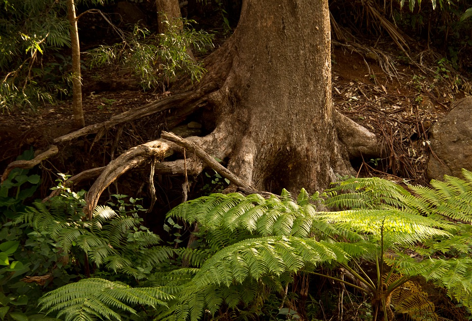 Ferns, Fronds, Green, Foliage, Tree, Roots, Rainforest