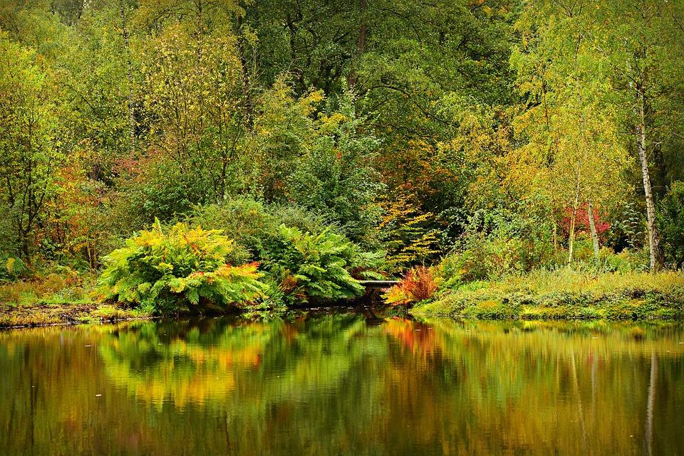 Pond, Water, Tree, Vegetation, Reflection, Banks, Park