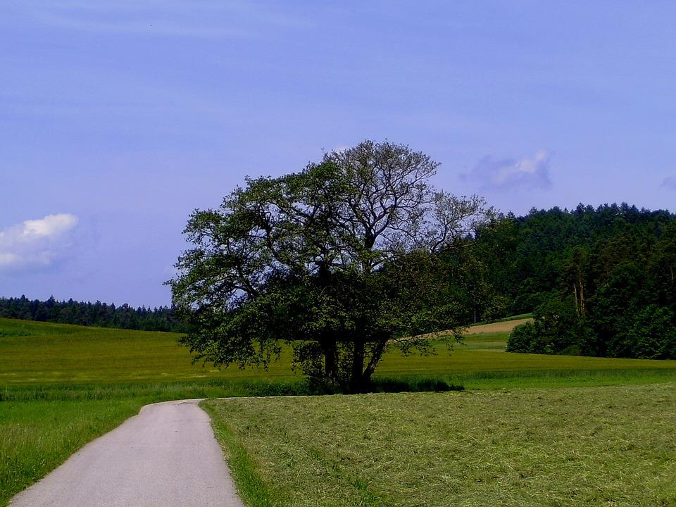 Summer, Landscape, Away, Reported, Tree, Grain Harvest