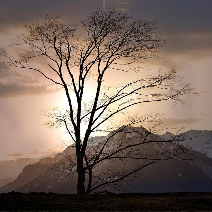 Landscape, Tree, Mountains, Height, Outlook, Rest