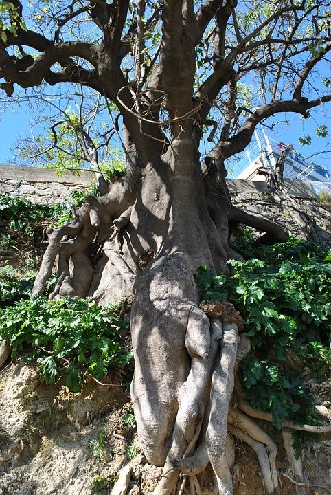 Nature, Tree, Root