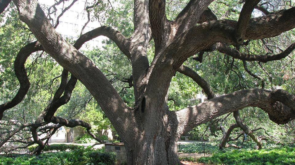 Tree, Texas, San Antonio