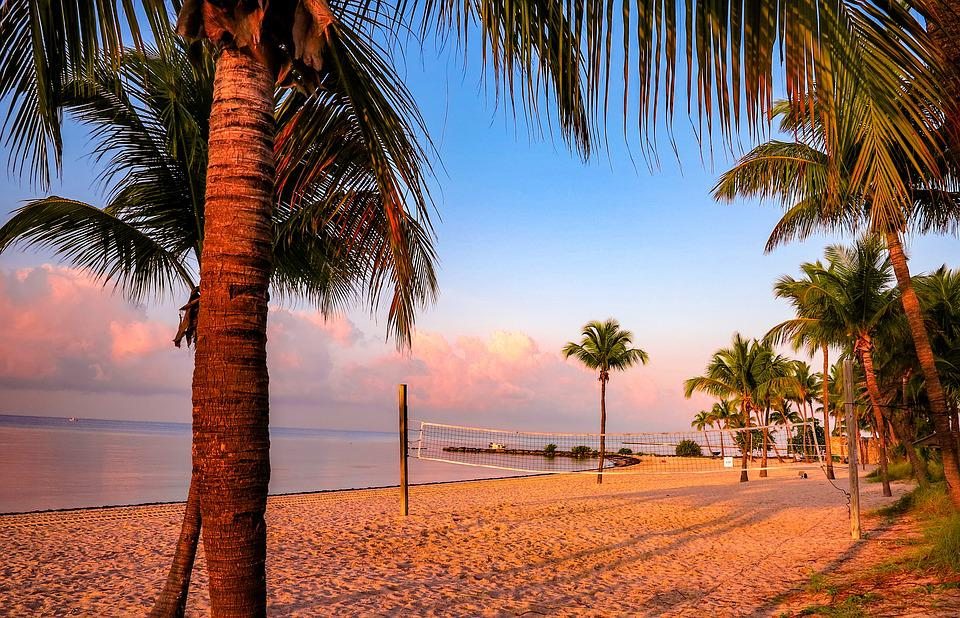 Arecaceae, Beach, The Coast, Sand, Tree, Keywest, Key