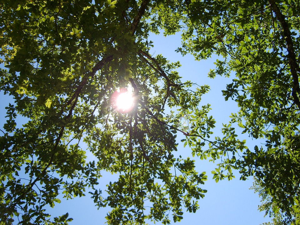 Tree, France, Sarlat, Nature