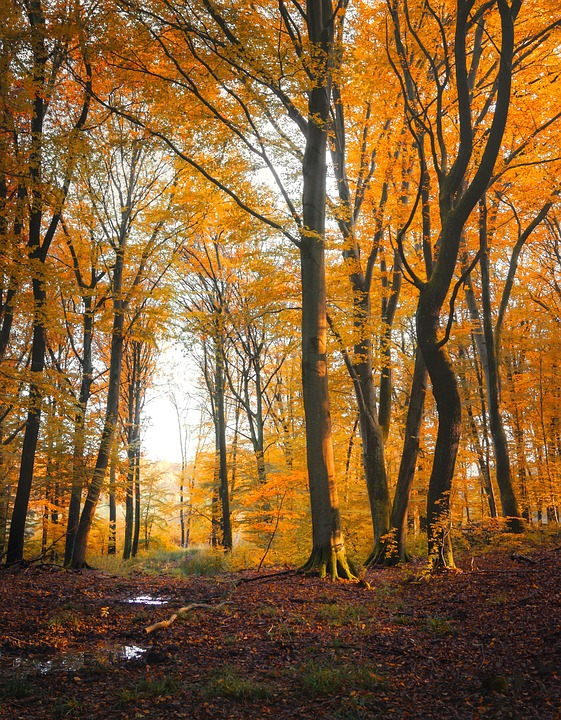 Autumn, Forest, Leaf, Sun, Color, Orange, Tree, Season