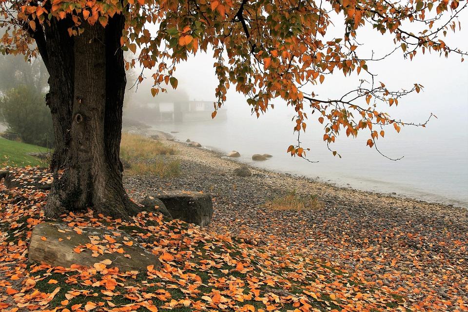 Autumn, Lake, Tree, Nature, Leaf, Season, The Fog
