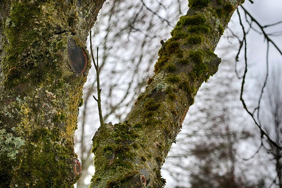 Tree, Nature, Wood, Outdoors, Season