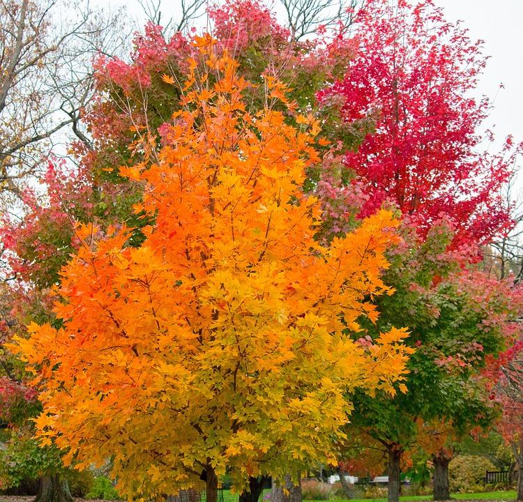 Fall, Leaf, Tree, Season, Park