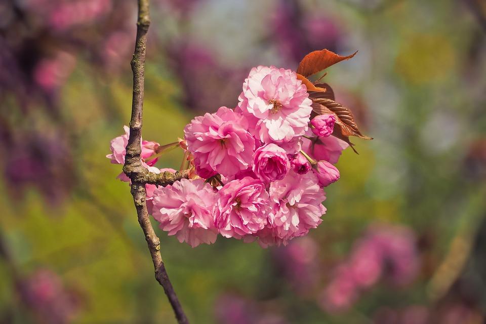 Flower, Nature, Tree, Plant, Season, Flowers, Petal