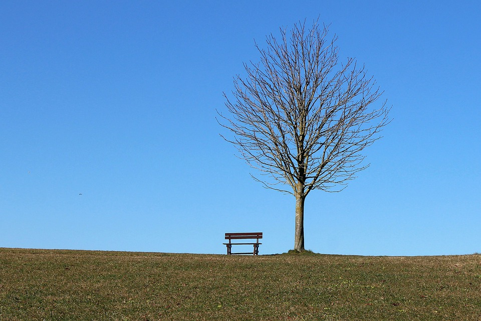 Tree, Bench, Seat, Sky, Blue, Resting Place, Rest