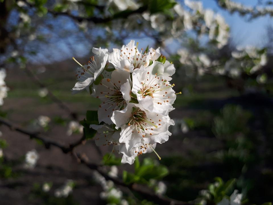 Flower, Nature, Tree, Plant, Branch, Sheet, Petal