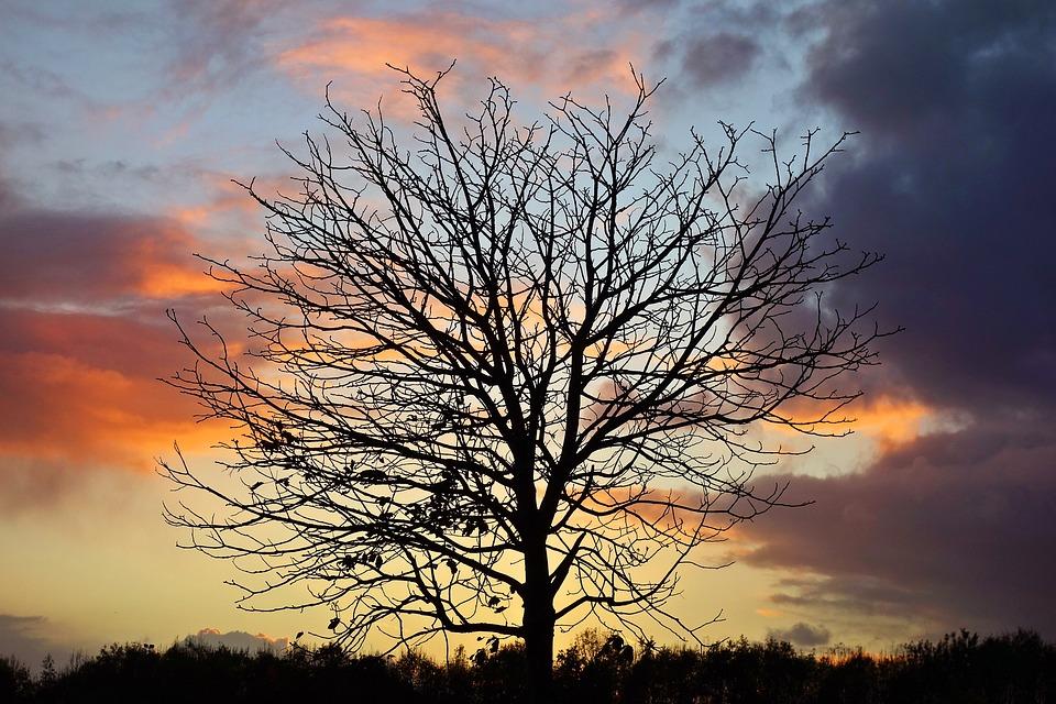Tree, Branch, Bare Tree, Silhouette, Tree Silhouette