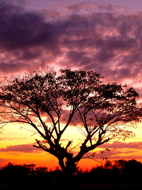 Tree, Tree Isolated, Tree Branch, Tree Silhouette Black
