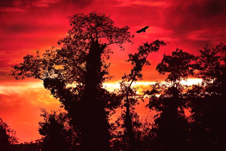 Tree, Silhouette, Branch, Sunset, Sky, Evening