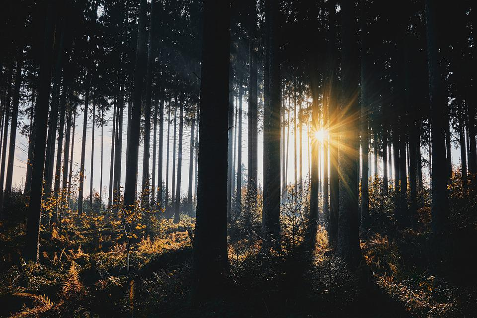 Sunlight, Trees, Silhouettes, Tree Silhouettes, Forest