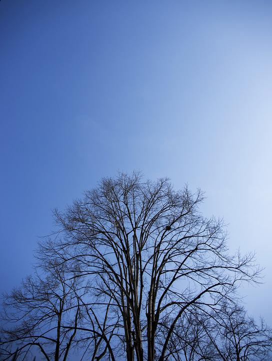 Tree, Blue, Nature, Branch, Leaves, Sky, Cloud, Plant