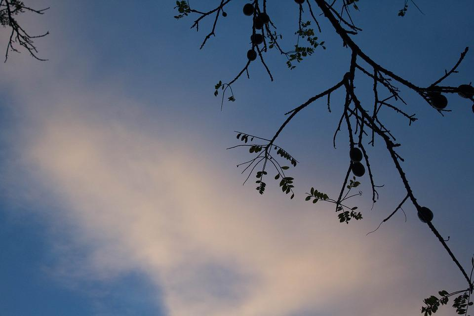 Sky, Tree, Nature, Branch, Outdoors, Landscape, Season