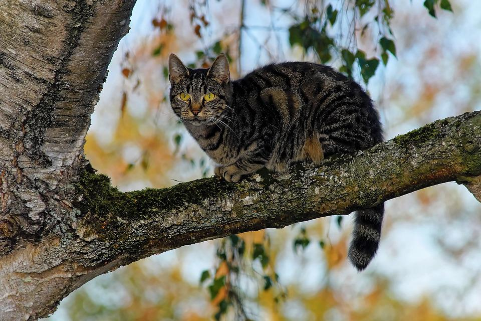 Cat, Tree, Branch, Sky, Atmosphere, Mysterious