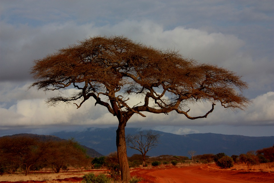 Safari, Landscape, Holiday, Kenya, View, Tree, Sky