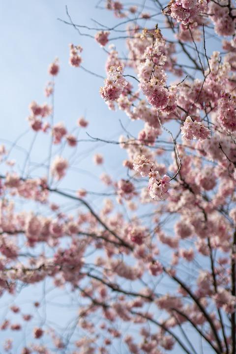 Nature, Tree, Landscape, Wood, Sky, Light, Spring