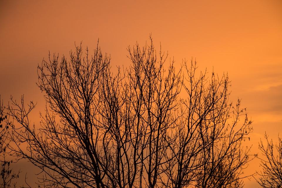 Sky, Tree, Autumn, Winter, Kahl, Sun, Flowers