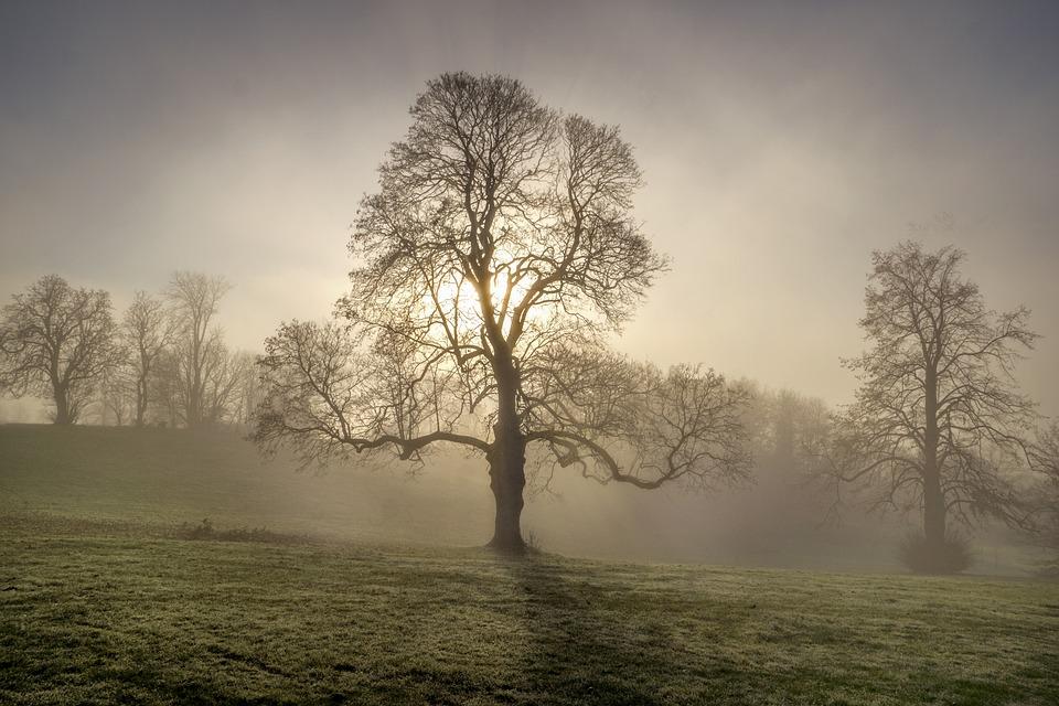 Tree, Single, Sky, Cloud, Sunrise, Sunset, Fog, Mist